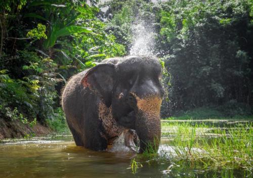 Anh Villa Phuket - Residence Harmonie Rawai - 20